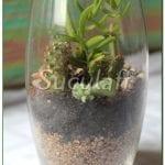 Suculentas en vaso de cristal