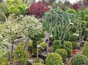 arbustos en macetas