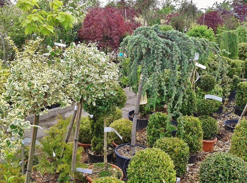 arbustos para macetas