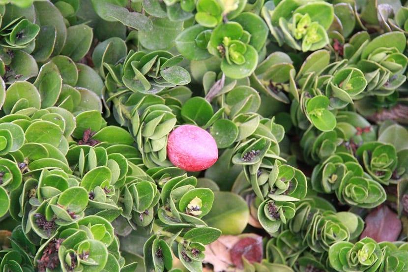 planta con forma de arbusto