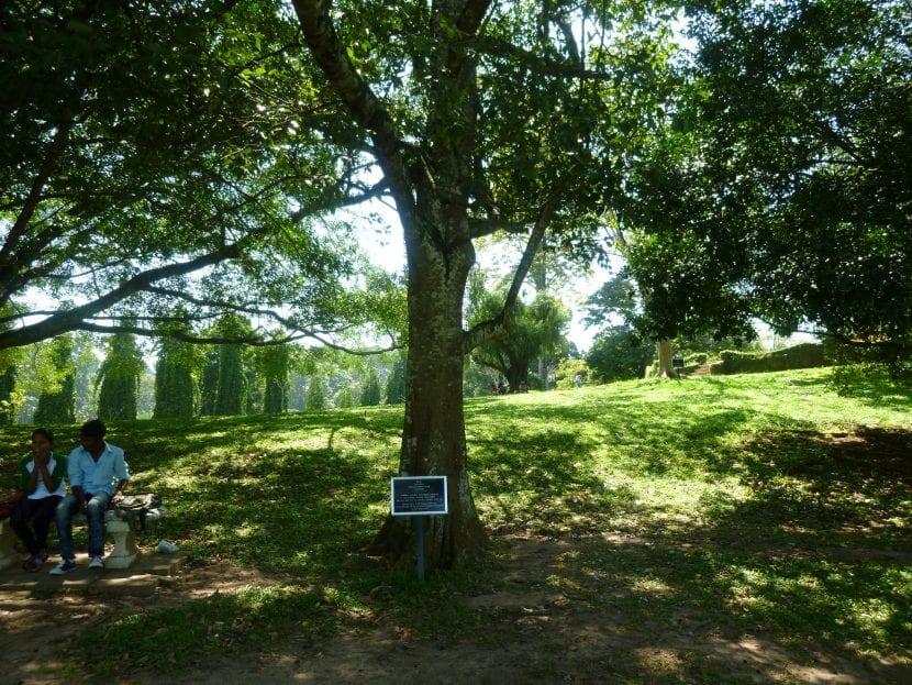 Vista del árbol de la canela