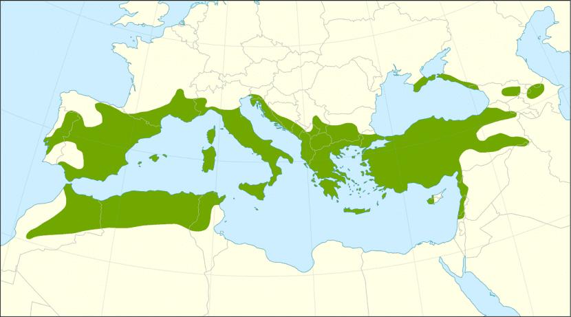 Distribución del Juniperus oxycedrus