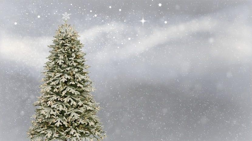 abetos apra colocar como arbol de navidad