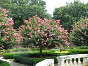 El Árbol de Júpiter es un estupendo árbol de jardín