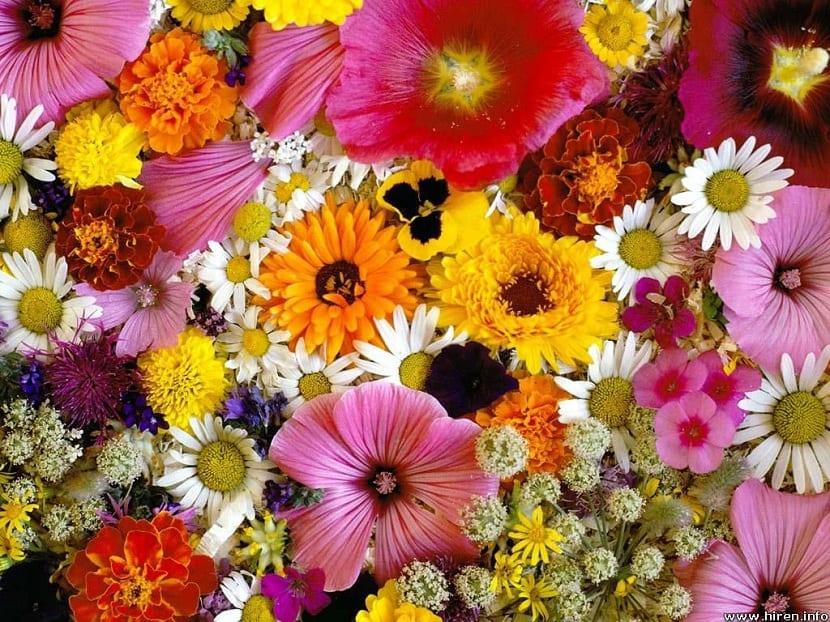 Selección de flores bonitas para decorar los interiores