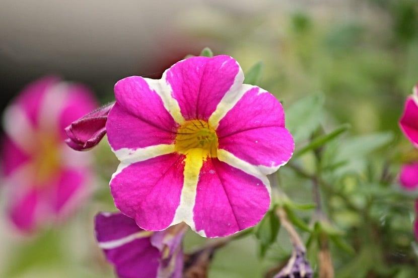 Macetas para colocar plantas colgantes