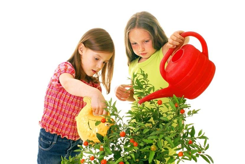os niños deberían cultivar y cuidar de las plantas