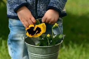 Siembra de plantas con niños