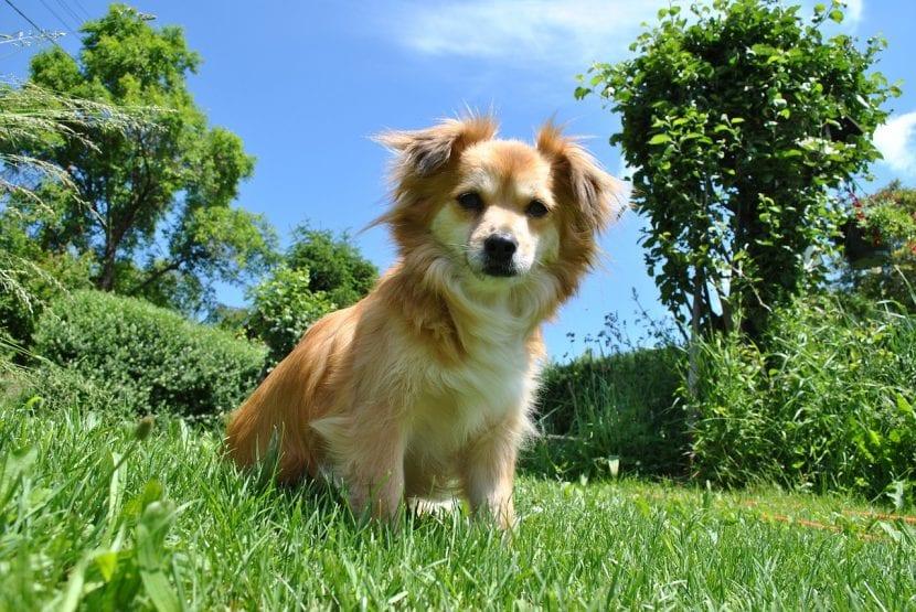 Perro joven en un jardín