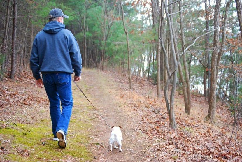 Perro paseando por el campo