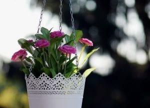 Plantas colgantes de interior y de exterior