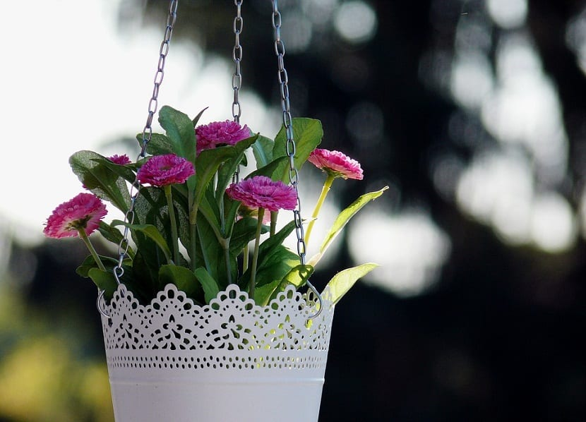 Plantas Colgantes De Interior Y De Exterior - Plantas-colgantes-de-interior