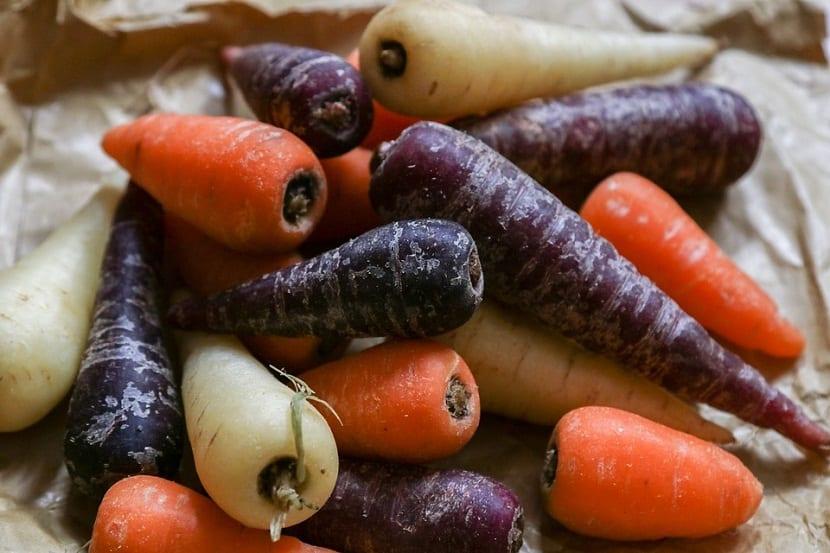 Plagas y enfermedades que afectan a la zanahoria