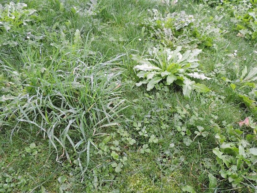 La mejor epoca para retirar la mala hierba es en primavera y verano