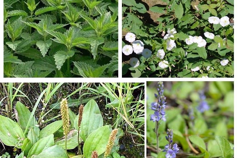 Los mejores remedios caseros para las malas hierbas