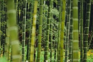 Todo lo que hay que saber sobre el Bambu