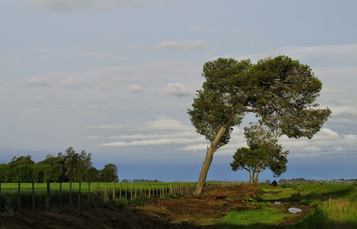 Los árboles inclinados pueden caer si no se enderezan