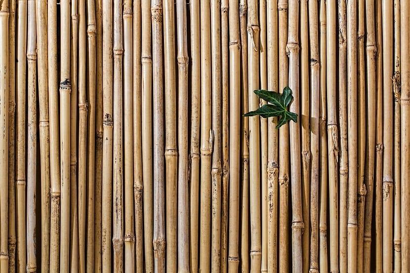 evitar que el bambu invada el jardin