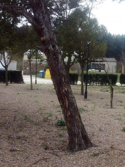 Aprende a enderezar un árbol inclinado