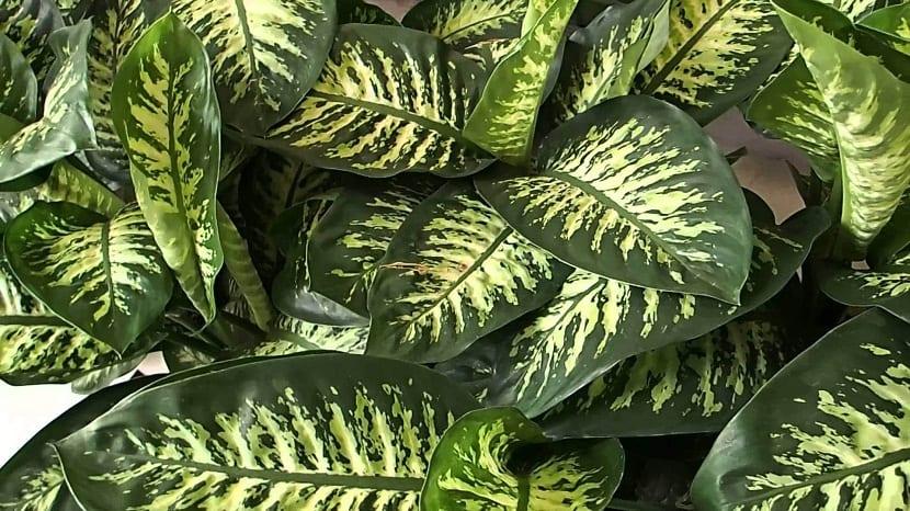plantas de sombra o semisombra