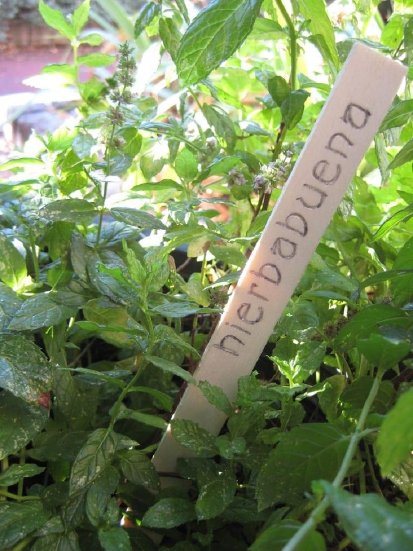 etiqueta de palillos para las plantas