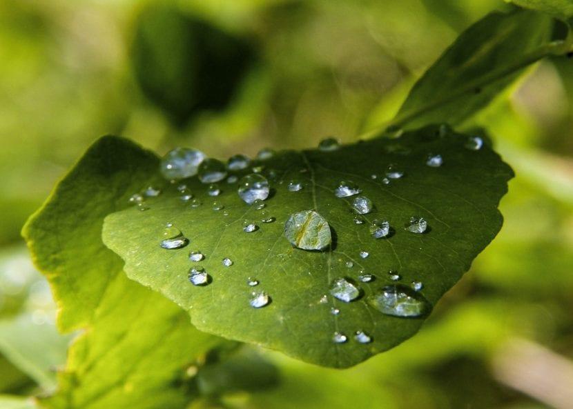 El potasio es muy importante para las plantas