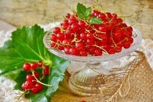 Vista de deliciosas grosellas rojas