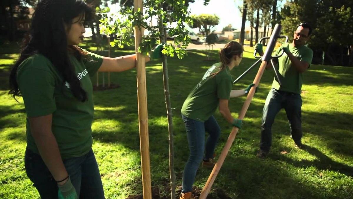 Guías para aprender cómo enderezar un árbol inclinado