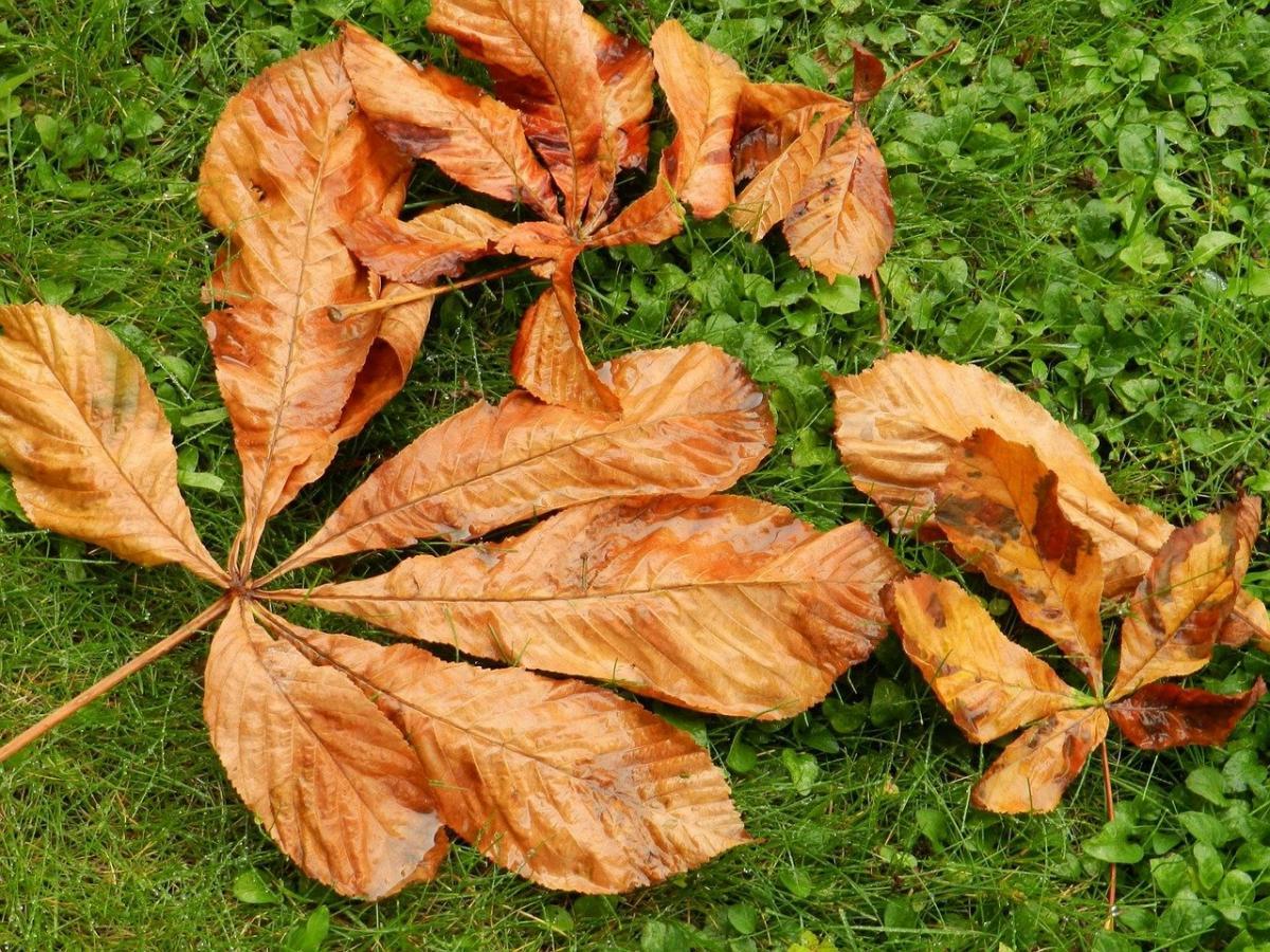 Las plantas pueden tener las hojas secas en otoño