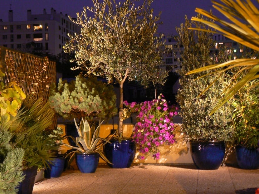 Ideas y consejos para decorar exteriores con plantas y flores for Plantas de exterior para macetas