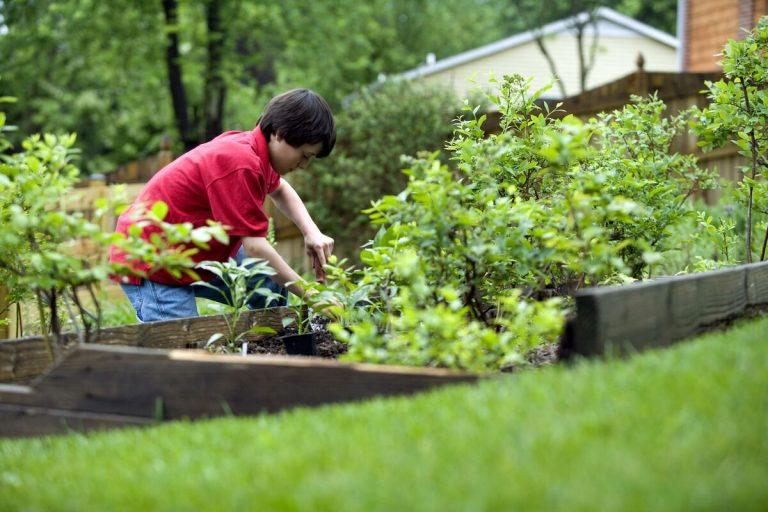 Los niños pueden aprender a cuidar las plantas