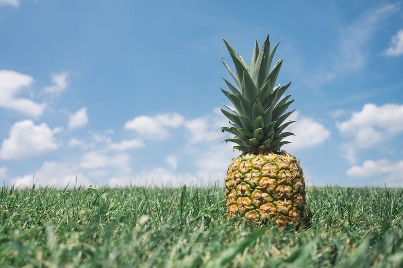 la pina es una fruta tropical