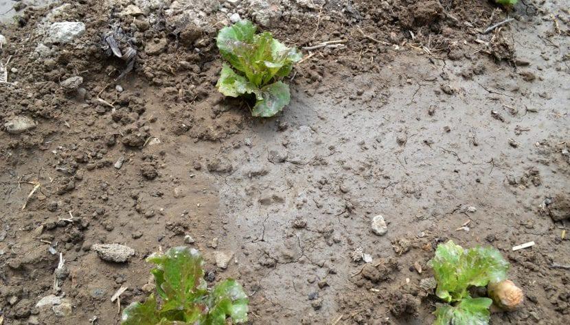 Vista del suelo ácido