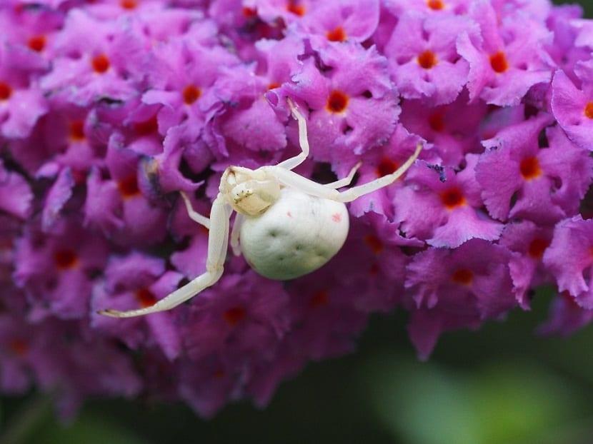 ste es un insecto que suele afectar cualquier tipo de cultivo hortícola