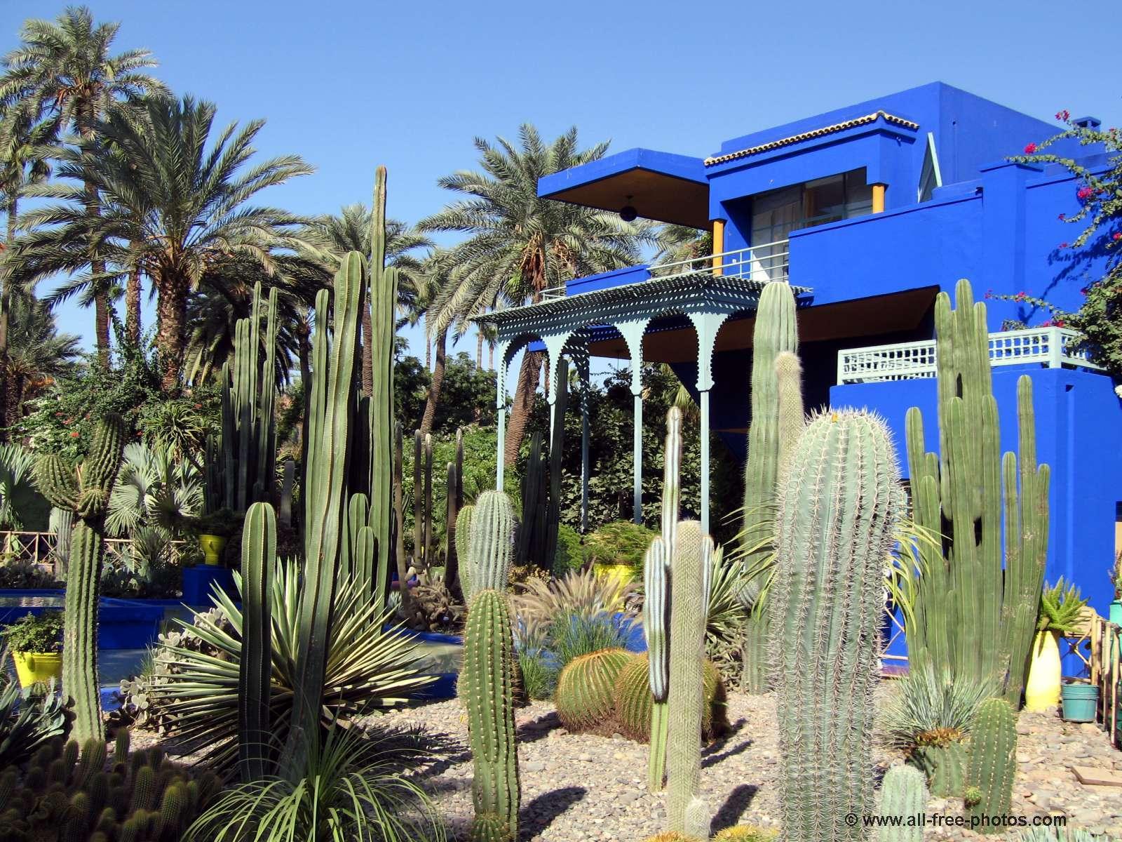 Sección de cactus del Jardín Majorelle