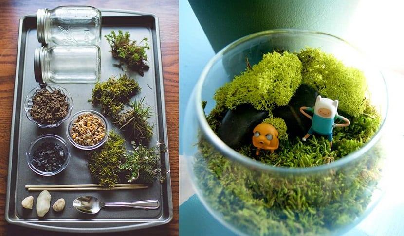 C mo hacer un terrario y qu plantas son las m s adecuadas - Decoracion para terrarios ...
