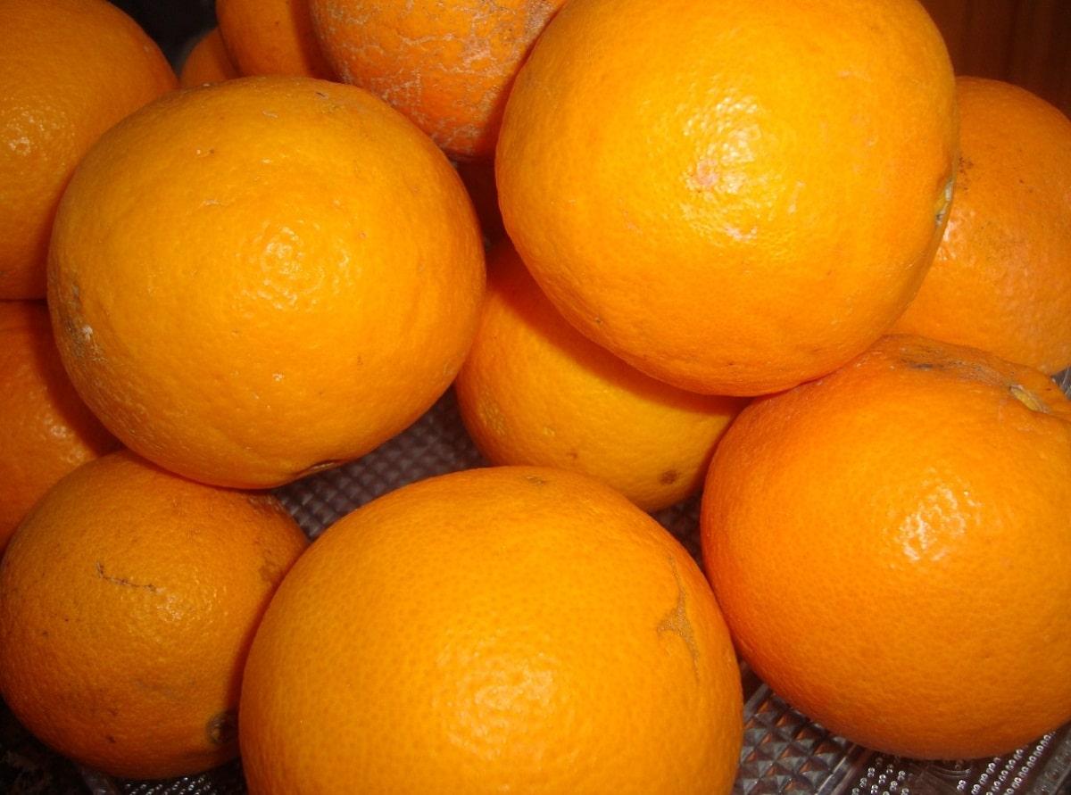 Las naranjas se recolectan cuando maduran