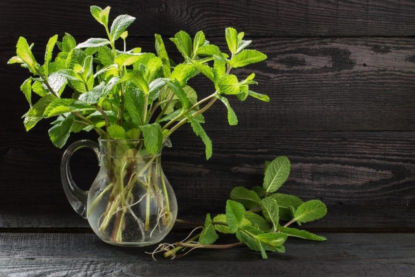 Planta creciendo en agua