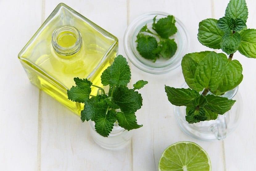 planta curativa y medicinal