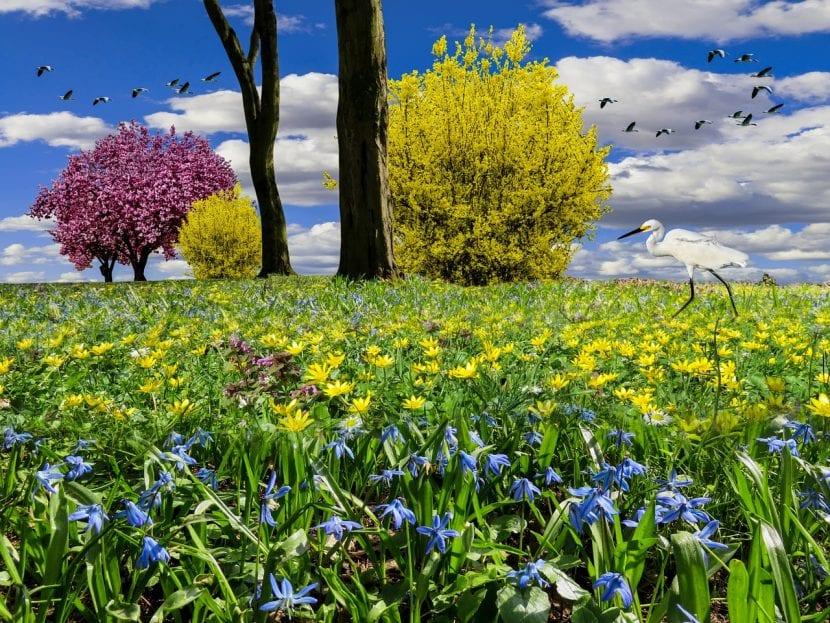 La forsitia es una planta que queda muy bien en los jardines
