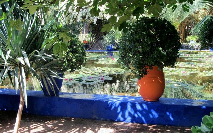 Un rincón idílico del Jardín Majorelle