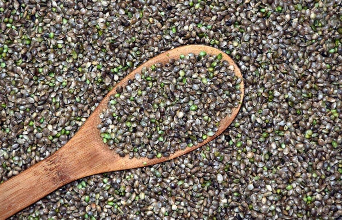 muchas semillas recogidas con una cuchara de madera