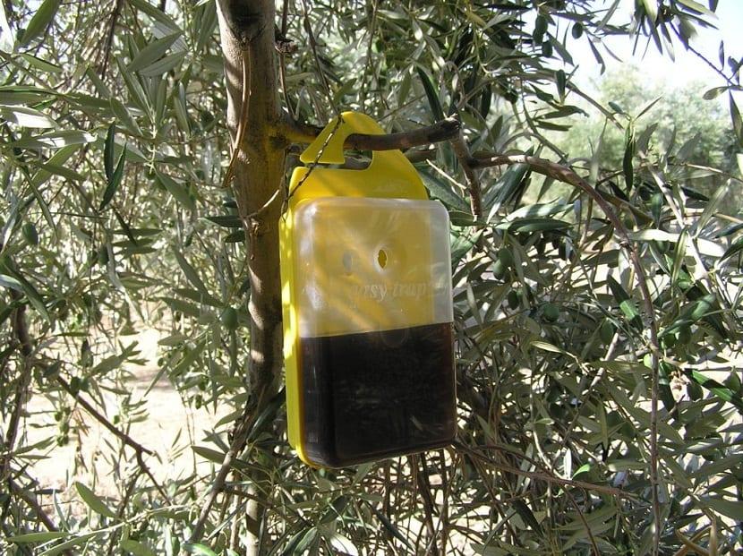 Tratamientos para la mosca del olivo