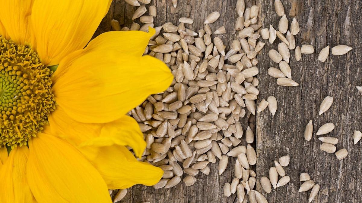 ventajas de las plantas con semillas evolutivas