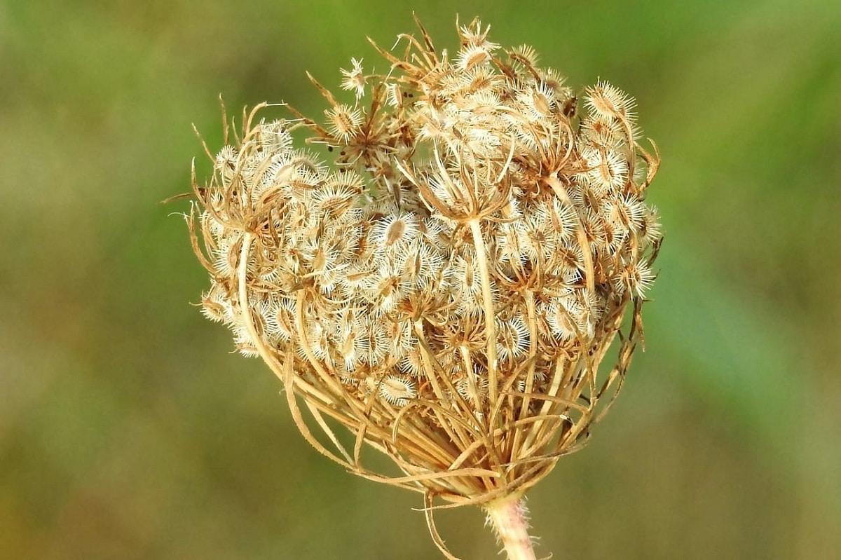 ventajas de las plantas con semillas