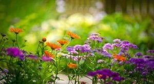 Flores bonitas jardin