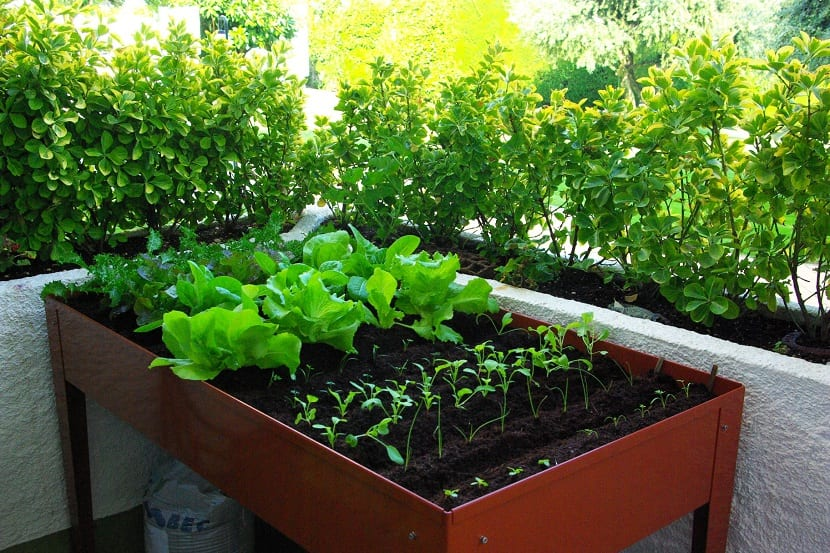 Cómo Hacer Un Huerto Ecológico En Casa Jardineria On