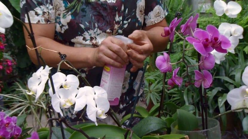 El abono ideal para orquideas