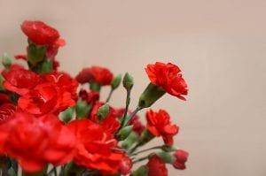 claveles rojos para decorar tu hogar