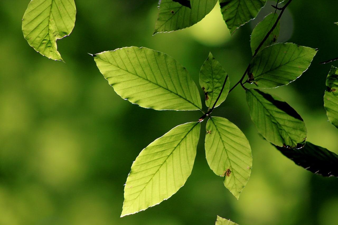 La clorosis es un problema común en las plantas
